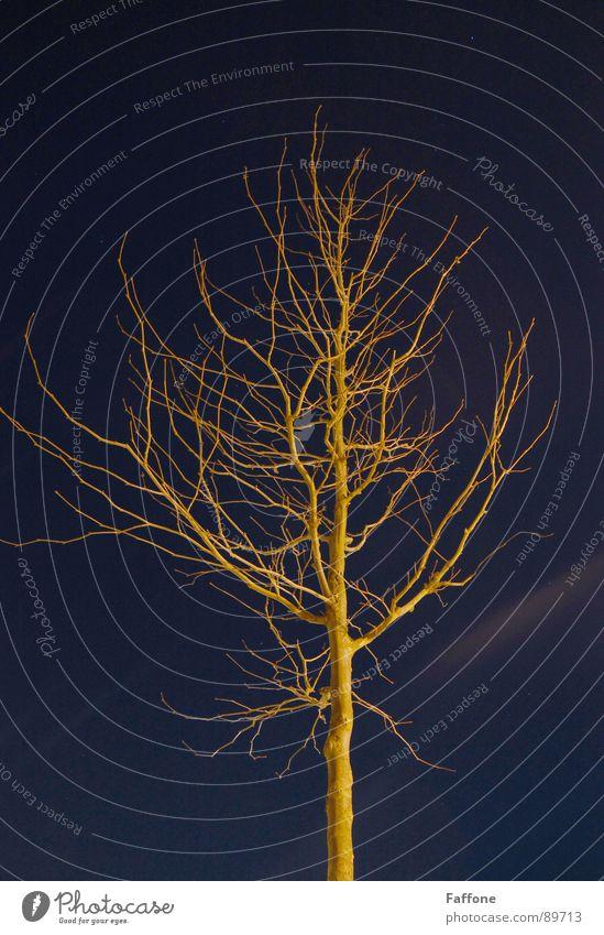 Naked tree at night Yellow Sky Night shot blue naked light