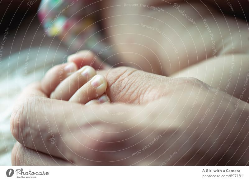 connectedness Human being Baby Father Adults Hand 2 Love Identity Infancy Contact Attachment To console Narrow Together Motherly love Protection To hold on