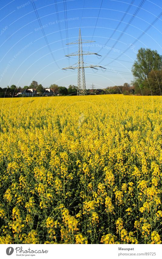 Sky Blue Yellow Far-off places Spring Electricity Blossoming Electricity pylon Transmission lines Canola Canola field