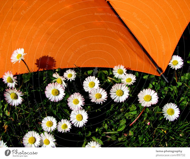 Umbrella meets Daisy Cloppenburg Sunshade Storm Clouds Grass Blade of grass Meadow Field Green Spring Summer Relaxation Sunbathing Flower meadow Environment