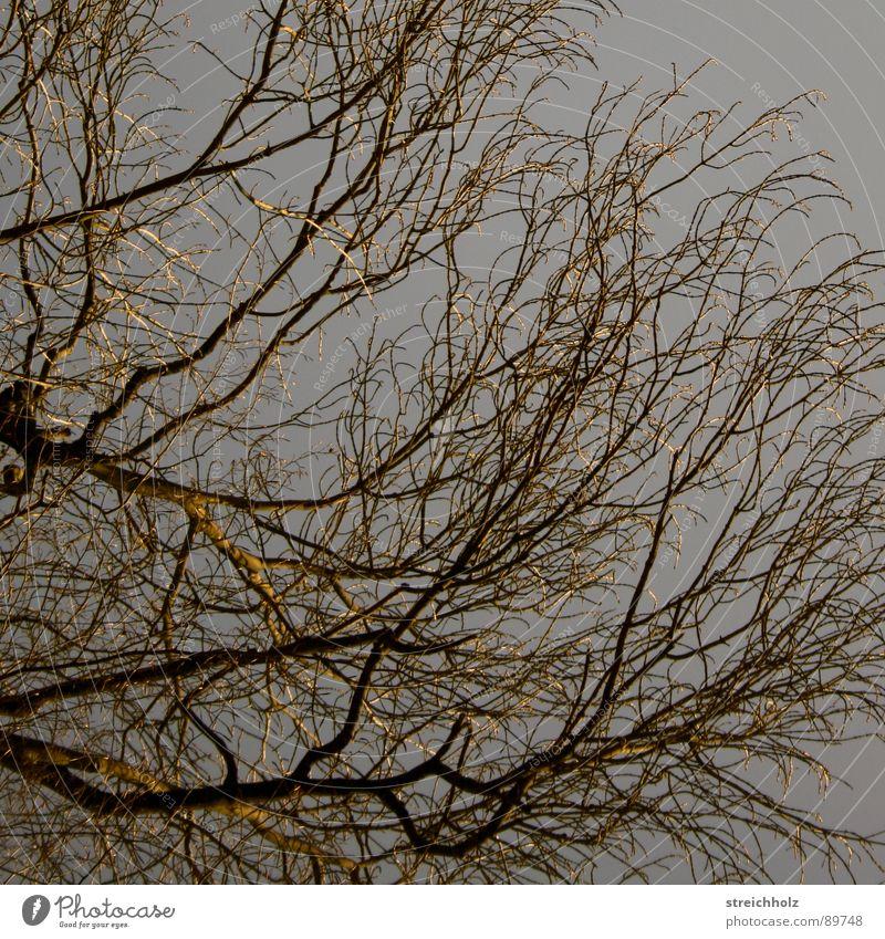 Sky Tree Branch