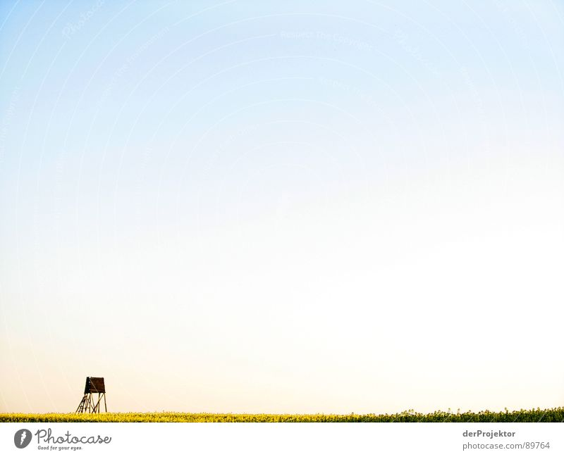 Sky Blue Yellow Wood Field Horizon Vantage point Observe Agriculture Canola