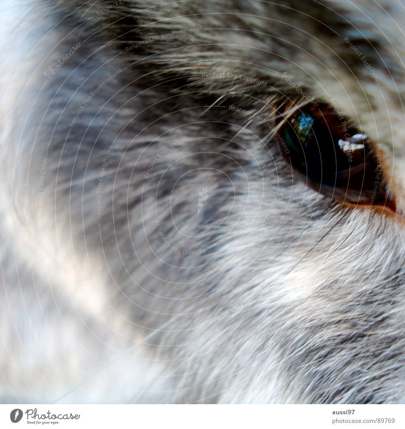 Eyes Animal Gray Brown Observe Pelt Animalistic Hare & Rabbit & Bunny Pet Mammal Eyelash Eyebrow Cage