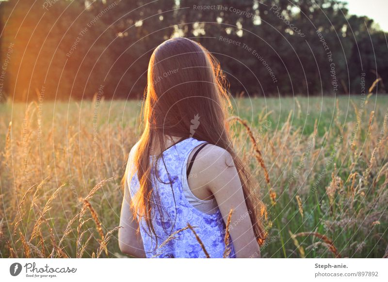Memories of a summer Feminine Young woman Youth (Young adults) Woman Adults 1 Human being Nature Sunrise Sunset Sunlight Summer Grass Meadow Field Brunette