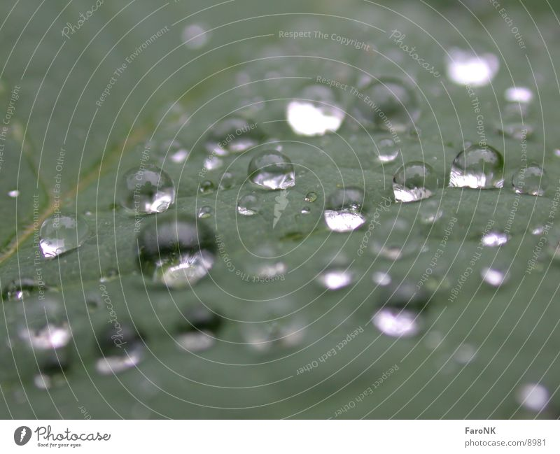 trickle Drops of water Water