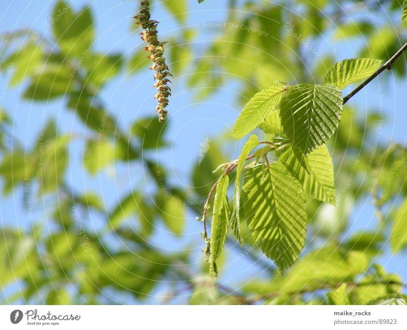 Nature Tree Green Blue Plant Leaf Colour Life Spring Landscape Fresh Branch Seasons Twig