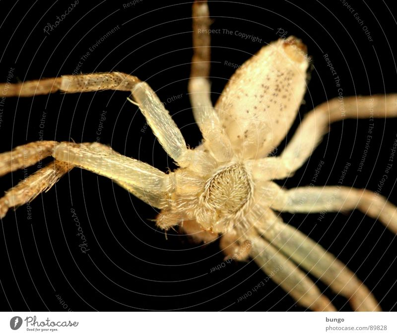Eyes Legs Small Fear Disgust Spider Panic Articulate animals Mandible Eating mechanism Chelicerae