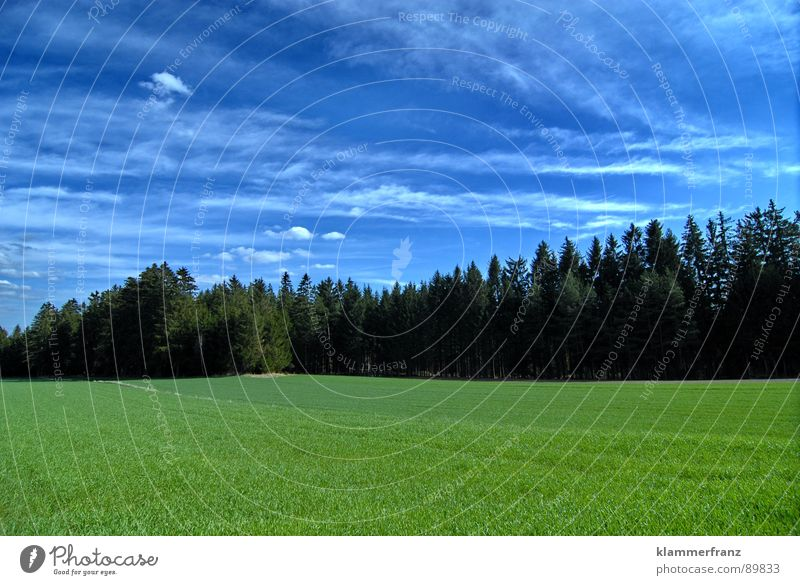 Group photo tree nursery Forest Field Clearing Hope Tree Spruce Coniferous trees Coniferous forest Grass Bushes Horizon Clouds Sky Bad weather Calm Loneliness