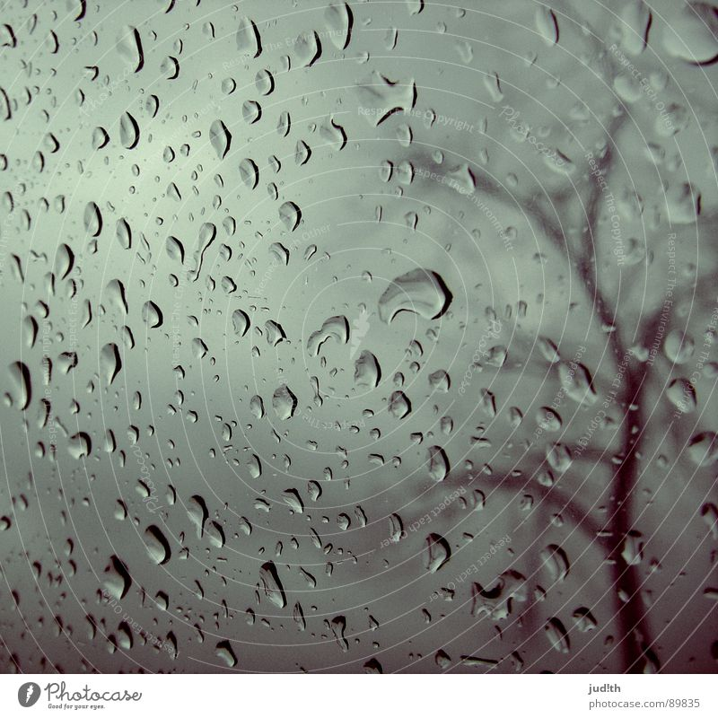 rain Rain Window Window pane Tree Autumn Gray Clouds Gray clouds Raincloud Wet Grief Loneliness Sky Water Distress Drops of water Glass Weather Sadness Branch