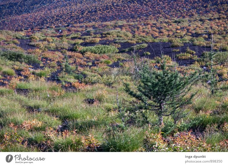 O Christmas tree Environment Nature Landscape Plant Autumn Climate Weather Tree Wild plant Hill Mountain Asia Honshu Japan Fujiyama Vacation & Travel Forest