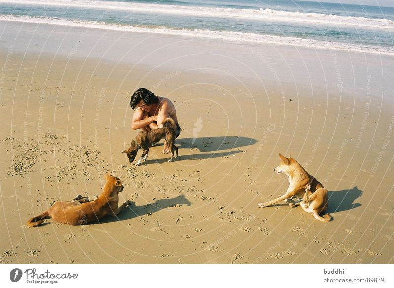 With dogs on the beach Beach Dog Ocean Waves Yellow Summer Bathing place Swimming trunks 3 Footprint Paw Vacation & Travel Coast Mammal Beautiful weather Shadow