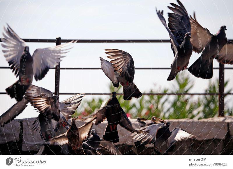 Away. Art Esthetic Flying Floating Pigeon Dovecote Dove gray Wing Escape Go up Bird Haste Panic Departure Colour photo Subdued colour Exterior shot Detail