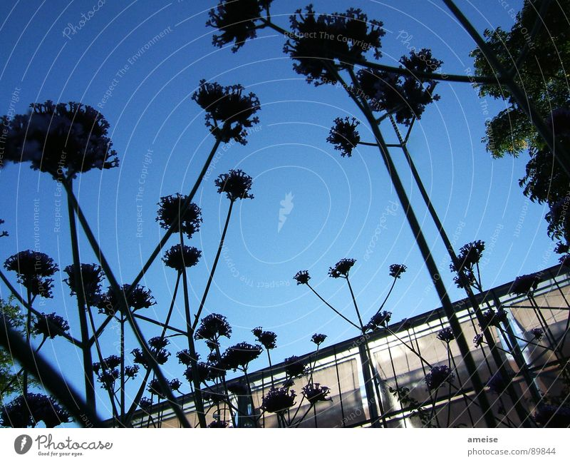 From the viewpoint of an ant Flower Greenhouse Nature Sky Blue sky Dark flowers Morning dawn light Glass sunshine