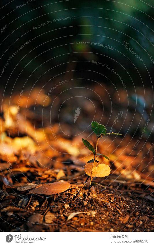 Awakening. Environment Nature Landscape Plant Earth Autumn Climate Fern Forest Esthetic Woodground Growth Flourish Leaf Arrange Assertiveness Life Colour photo
