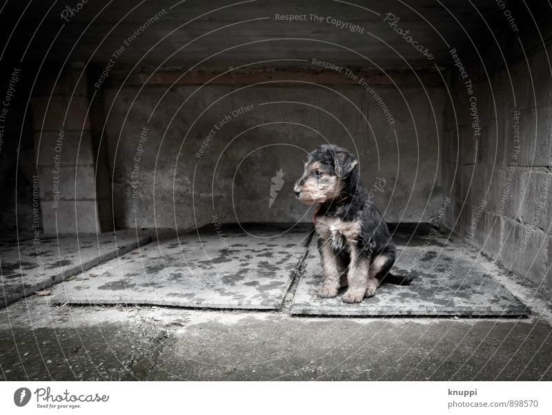 Dog White Animal Black Winter Dark Environment Baby animal Sadness Autumn Wall (barrier) Gray Small Rain Power Sit