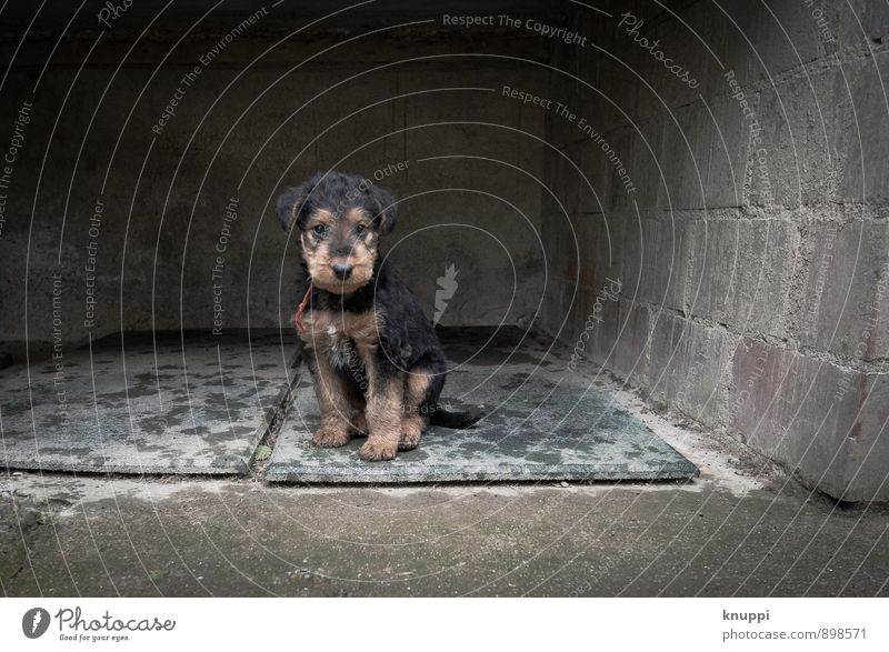 Dog Red Animal Dark Baby animal Wall (building) Feminine Wall (barrier) Gray Small Healthy Brown Sit Happiness Wet Pelt