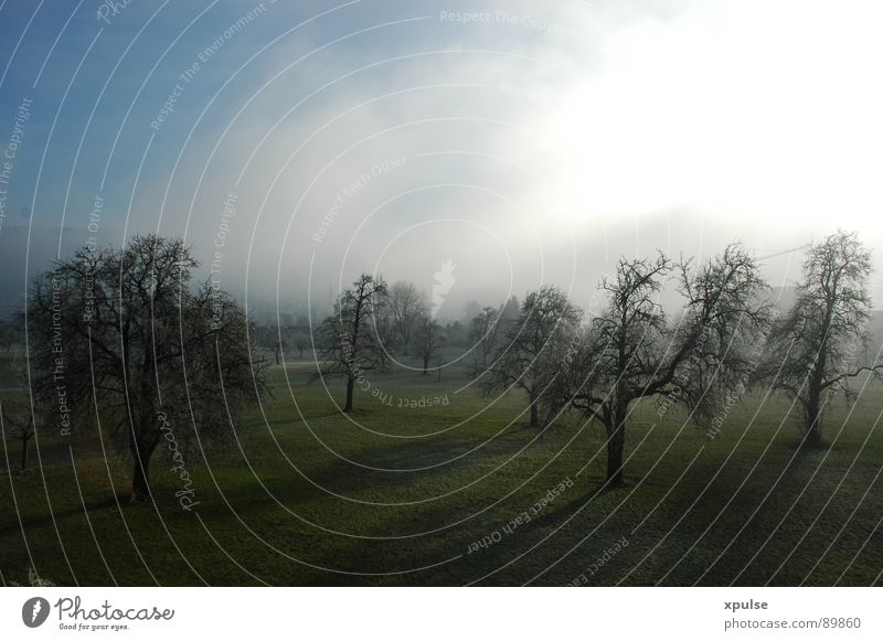 Trees in fog with long shadows Forest Winter Fog Grief Grass Moody Apple tree Light Bog Agriculture Culture Meadow Feed Autumn Dark Green Shadow Far-off places