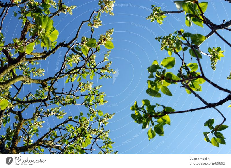 springtime nutrition Spring Tree Leaf Green Expel Growth Wake up Blossoming Empty Sky Twig Branch Blue forgather Vacation & Travel Near Gap Broken Remainder