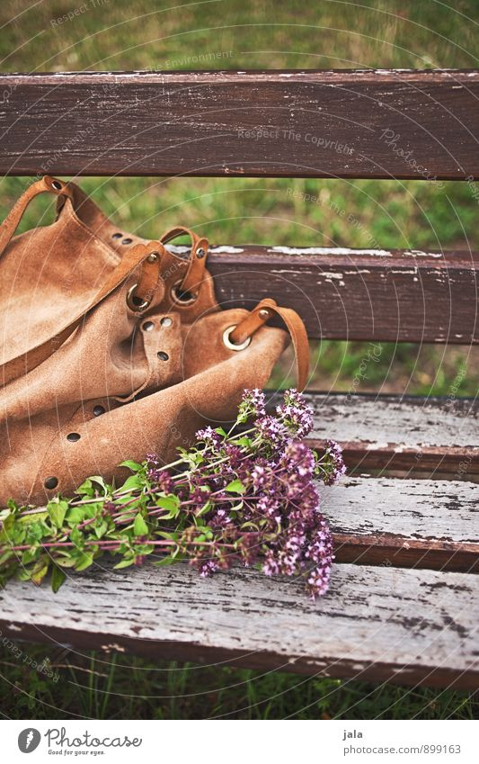on the way Environment Nature Plant Flower Grass Blossom Wild plant Park Bag Bouquet Natural Bench Autumnal Colour photo Exterior shot Deserted Day