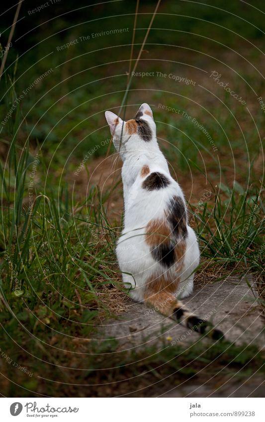 lauern Animal Pet Cat 1 Esthetic Natural Colour photo Exterior shot Deserted Day Animal portrait Rear view
