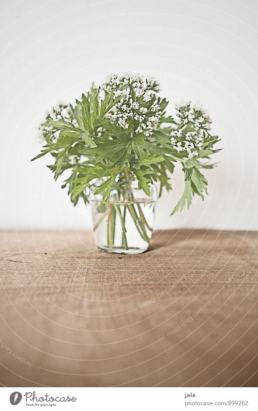bouquet Plant Flower Leaf Blossom Wild plant Bouquet Esthetic Simple Elegant Beautiful Natural Colour photo Interior shot Deserted Copy Space top