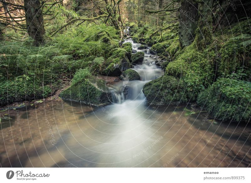 black forest water Relaxation Calm Vacation & Travel Tourism Mountain Hiking Nature Landscape Plant Water Rain Tree Moss Fern Foliage plant Wild plant Forest