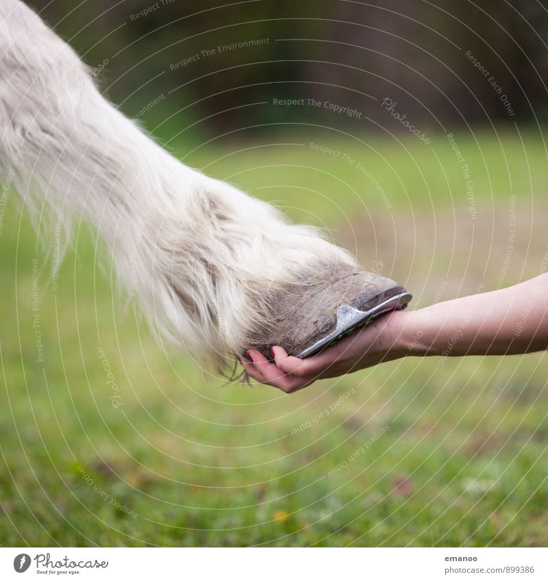 hoof in hand Human being Feminine Woman Adults Hand Nature Grass Meadow Field Animal Pet Farm animal Horse 1 To hold on Love Green White Emotions Joy Sympathy
