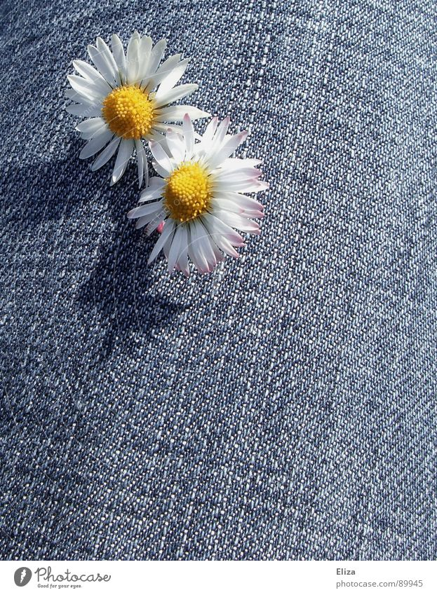 Plant Sun Summer Flower Yellow Playing Spring Sadness Legs Grief Curiosity Jeans Blossoming Sunbathing Denim Daisy
