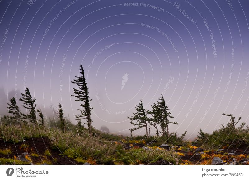 Nature Vacation & Travel Tree Landscape Forest Cold Environment Mountain Meadow Autumn Air Weather Fog Hiking Climate Adventure