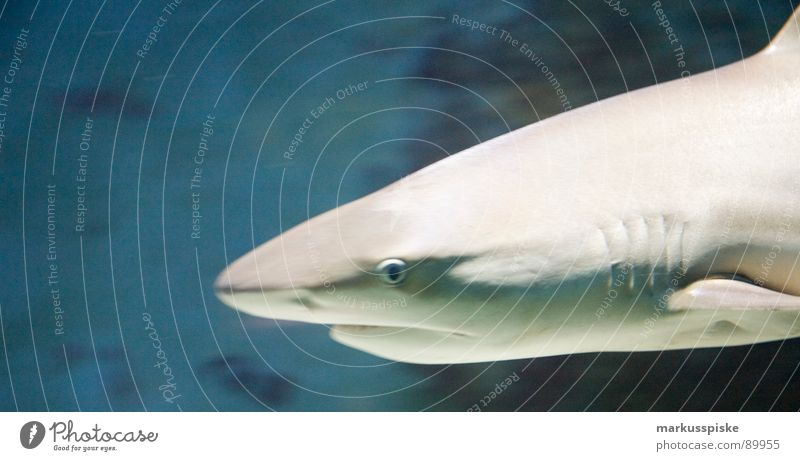 Water Ocean Animal Fish Set of teeth Shark Muzzle Water wings Pine