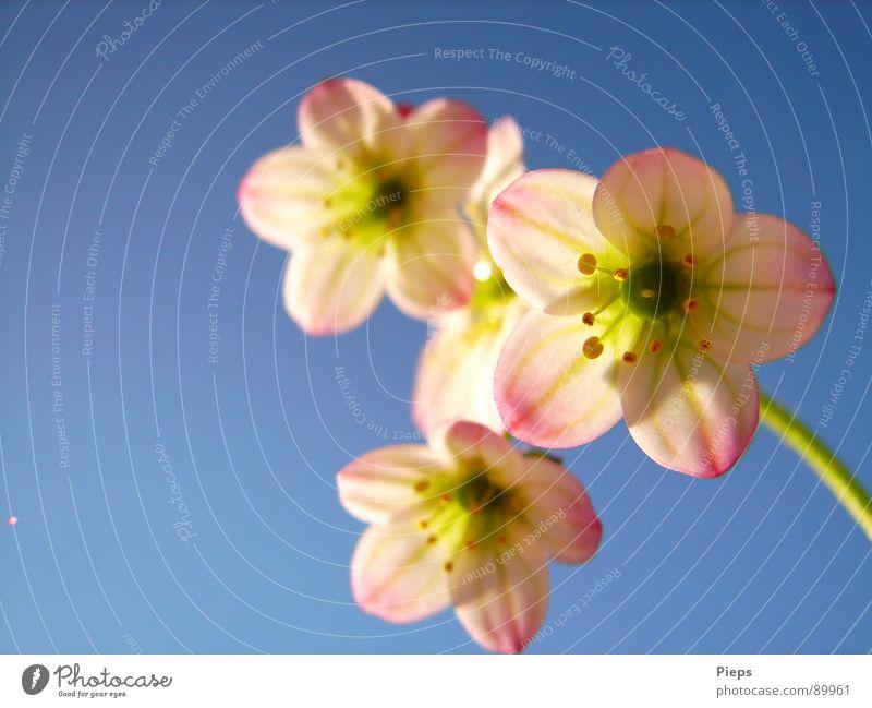 Nature Sky Flower Joy Blossom Spring Garden Delicate Blossoming April