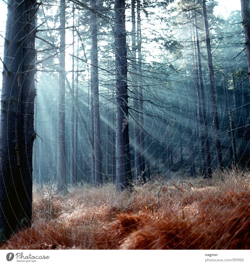 Autumn morning in the forest Forest Morning Grass Sun Lighting Nature Dawn