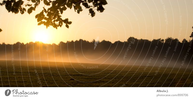 Nature Sun Landscape Calm Forest Black Yellow Life Emotions Death Moody Field Fog Illuminate Gold Future