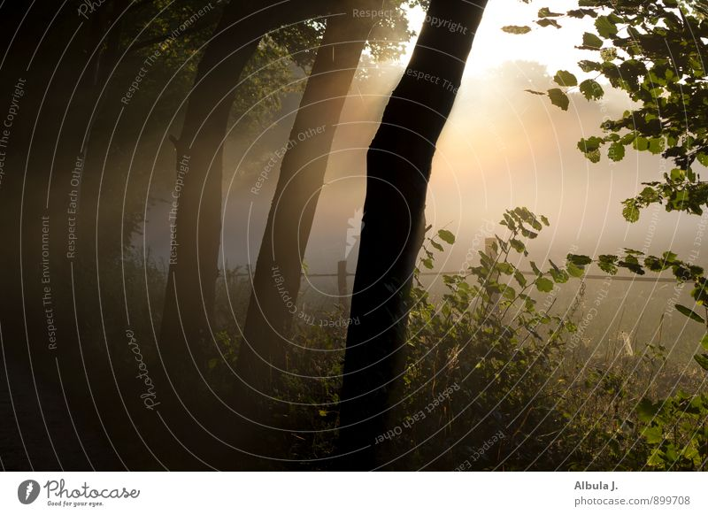Nature Sun Tree Relaxation Landscape Calm Black Forest Death Moody Dream Field Fog Illuminate Gold Bushes