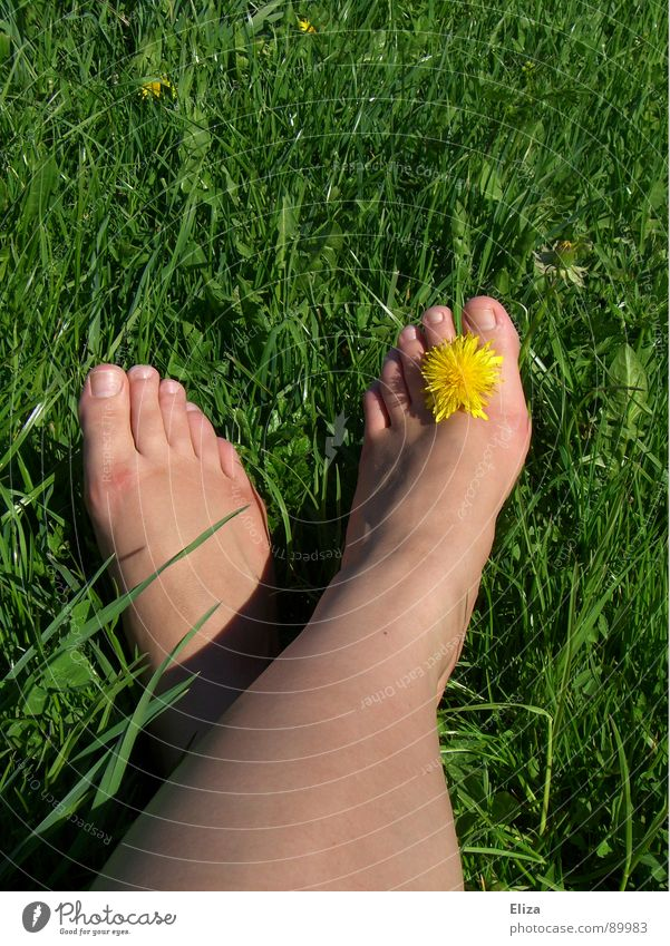 organic foot jewellery Summer Meadow Spring Dandelion Yellow Summery Sunbathing Flower Plant Blossom To enjoy Relaxation Grass Flower meadow Spring fever Toes