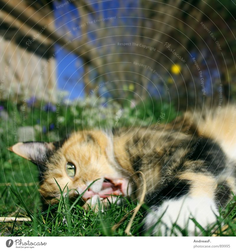 Summer Joy Animal Playing Grass Spring Cat Sweet Cute Mammal Pet Muzzle Domestic cat Spring fever