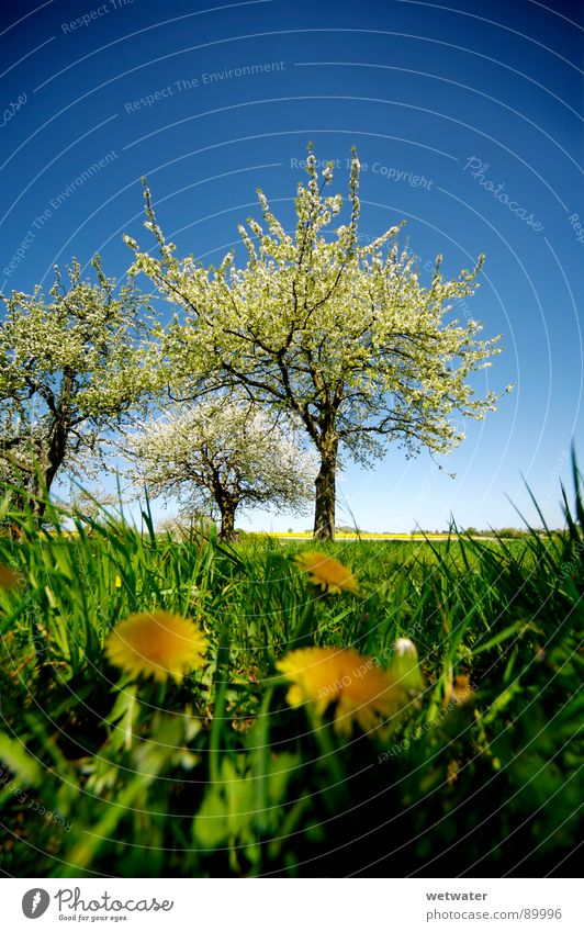 It´s jump in the fairytale world Spring Jump Tree Blossom Fresh Green Flower Dandelion Grass Sky Germany Blossoming blue