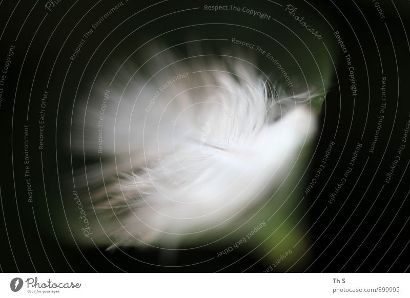 Nature Beautiful Green White Calm Black Movement Emotions Flying Moody Elegant Authentic Esthetic Feather Wing Simple