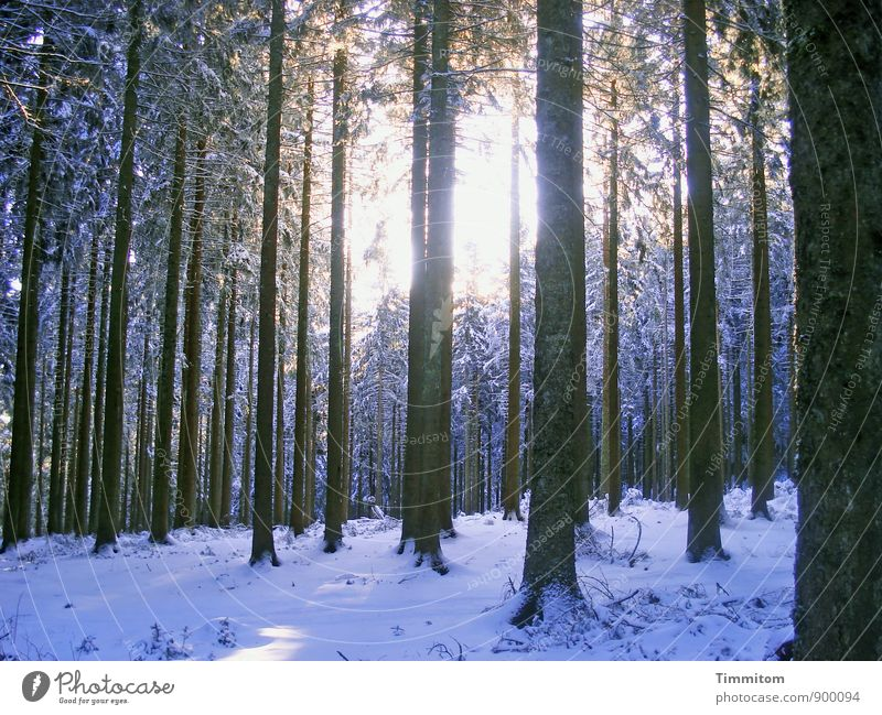 Any time of the year. Environment Nature Plant Sky Sun Sunlight Winter Weather Snow Tree Forest Bright Cold Black White Emotions Tree trunk Colour photo