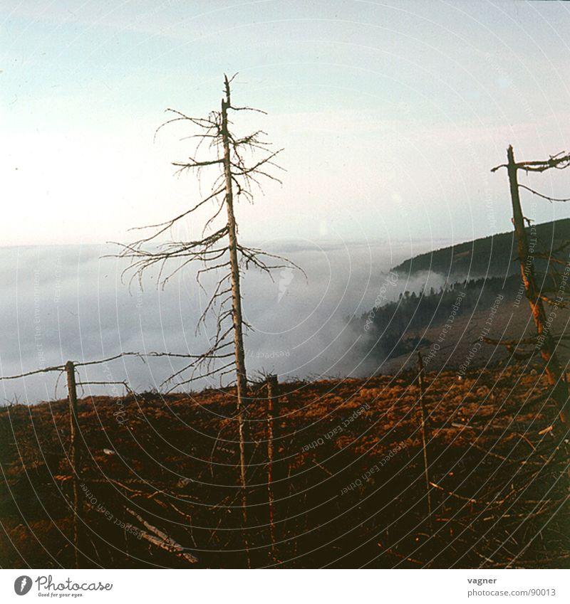 mountain Sunrise Fog Tree Dry Forest Autumn Mountain Morning smoke damage