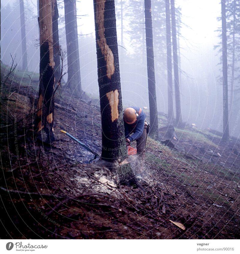 Man Tree Forest Fog Working man Forestry Spruce Saw Logging Cut down Power Saw