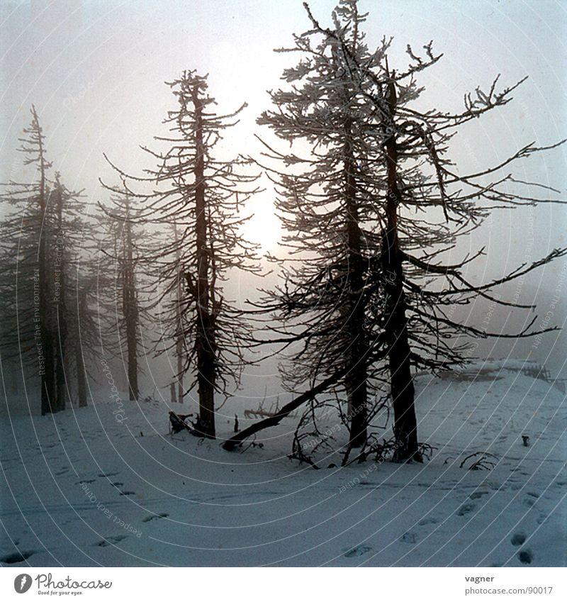 Tree Sun Winter Forest Snow Fog Acid rain