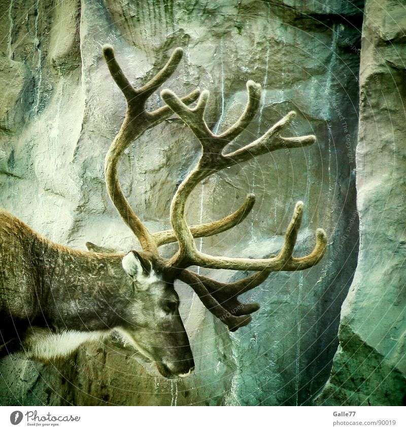 Animal Silhouette Power Masculine Wild animal Mammal Antlers Deer Elk Relief Ruminant