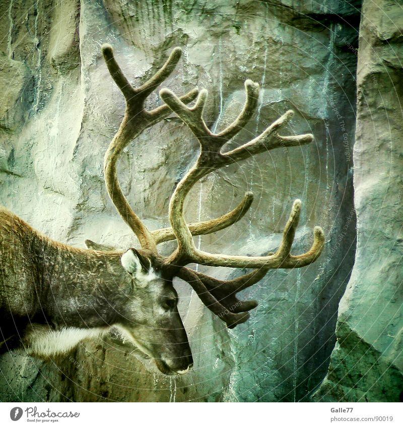 Animal Silhouette Power Masculine Wild animal Mammal Antlers Deer Elk Relief Ruminant