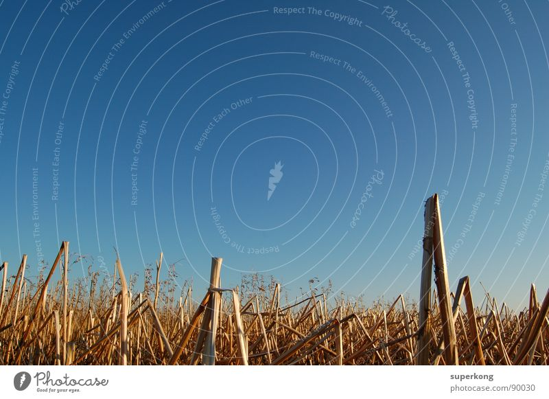 Nature Sky Blue Summer Field Vantage point Drought Wheatfield