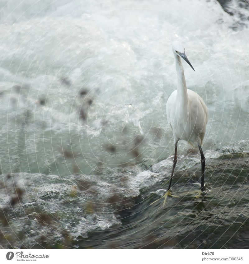 Balancing act (slippery when wet) Environment Water Summer Plant Waves Coast River bank buttocks Waterfall Rapid White crest Foam Turin Italy Downtown Animal