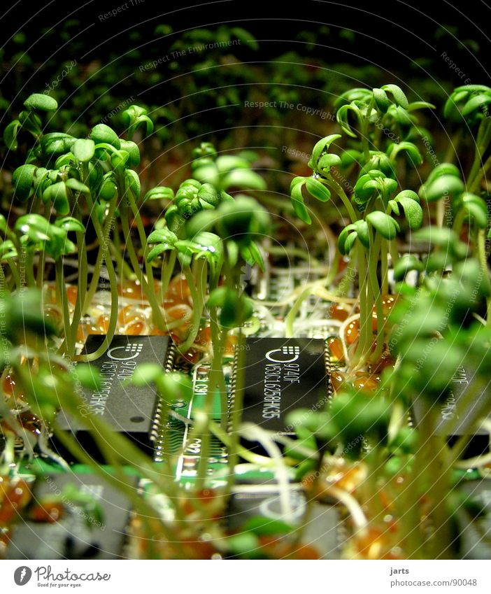 Green wins II Organic produce Success Science & Research Computer Internet Renewable energy Nature Plant Growth Transience Circuit board Electrical equipment