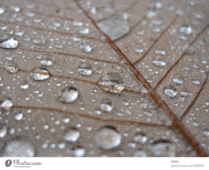 morning dew Leaf Autumn Brown Drops of water Rope Rain Water