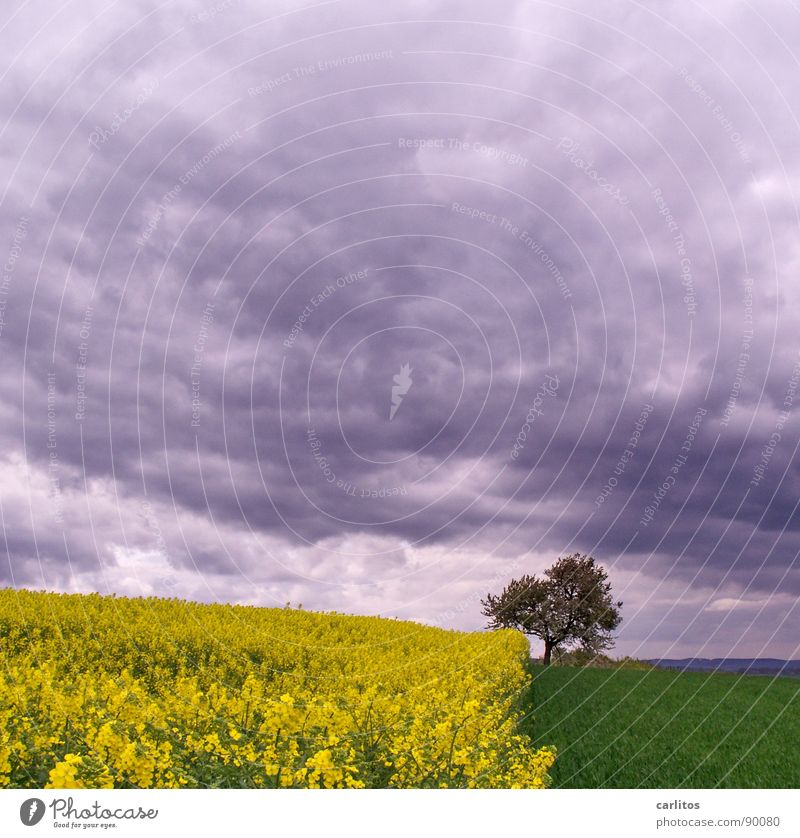 Right on trend ... Tripartite division Canola Field Tree Blossom Spring Clouds Yellow Green Geometry Landscape southern Lower Saxony