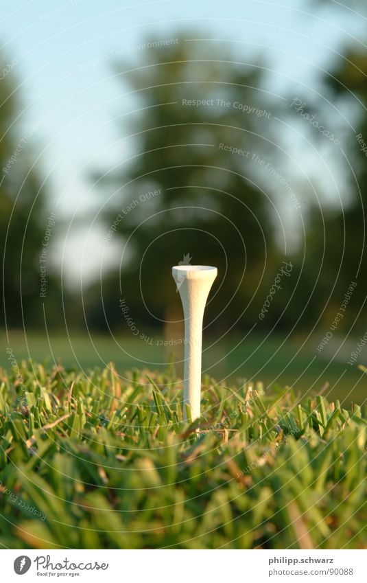 The Golftee Golf course Meadow Grass Green Ball sports Playing Tea golftee wood tea